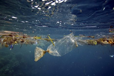 Fighting for a Plastic-Free Ocean